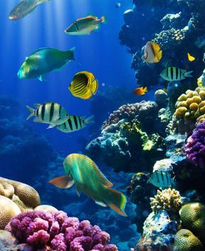 Čudovit akvarij